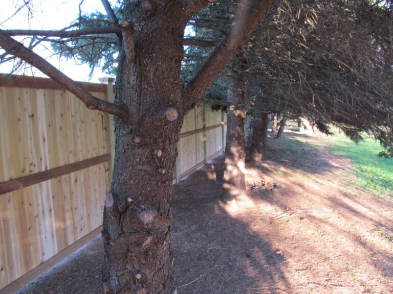 Wooden Panel fence in tree row