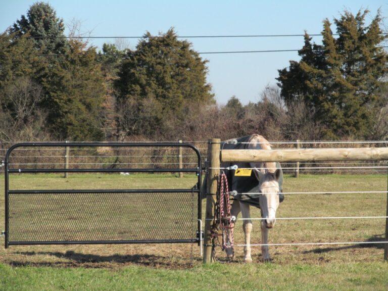 Horse sticking nose through fence