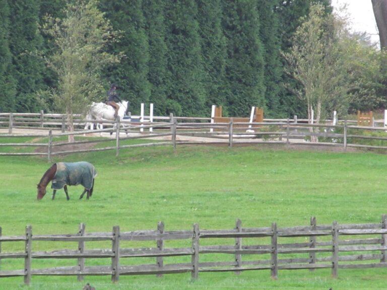 Horses inside of Rail Fence